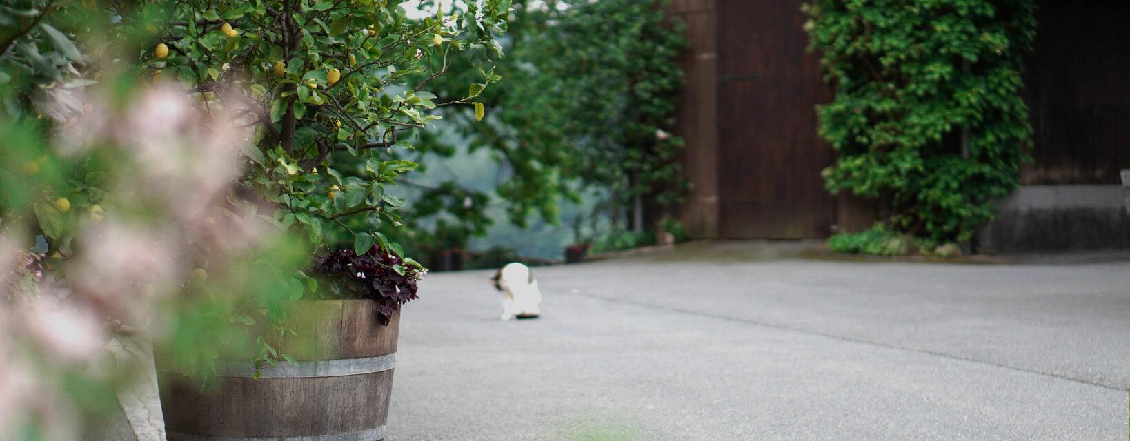 Weingut Riegelnegg Stammhaus Gamlitz Südsteiermark